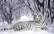 "ИБ-007-Империя бисера ""Белый тигр"" 40х60 см"