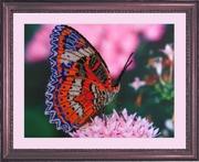 "102-Butterfly ""Бабочка"" 25х33 см"