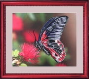 "103-Butterfly ""Бабочка"" 24х28 см"