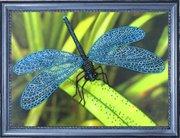 "105-Butterfly ""Стрекоза"" 22х30 см"