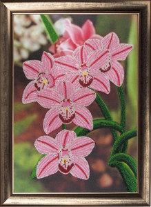 """СА-208 """"Орхидеи"""" 36х25 см"""