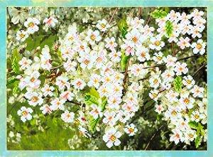 """4092-Матренин Посад """"Цветущая вишня"""" 37х49 см"""